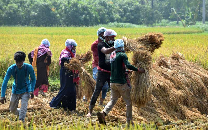 YOUNGSTERS REAP RICH HARVEST FOR MARGINAL FARMERS DURING COVID-19 CRISIS