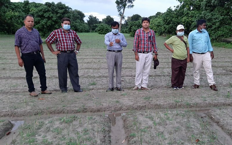 Scientists from the Bogura Spice Research Center Visited WAVE's Summer Onion Exhibition Plot